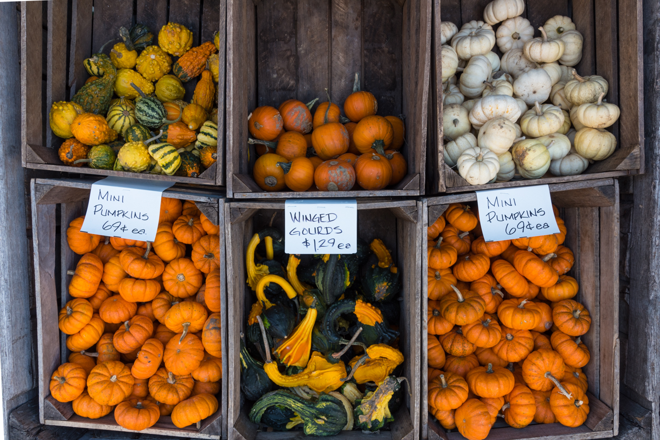 Pipkin's Market is especially beautiful in the Fall with its wide selection of pumpkins, Fall flowers, and gourds of varying shapes, sizes, and colors. / Image: Phil Armstrong, Cincinnati Refined / Published: 11.17.16