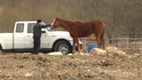 City seizes malnourished horses, ponies and donkeys
