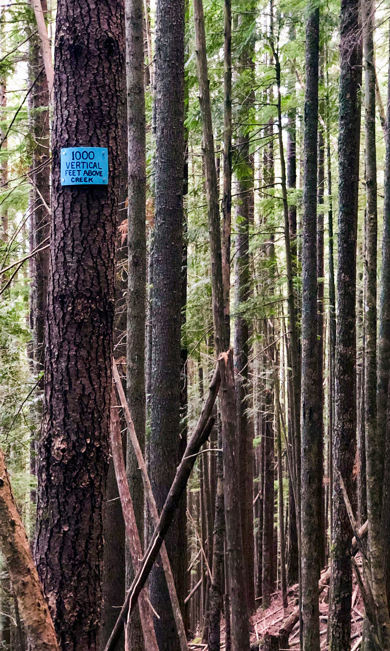 <p>Elevation markers are affixed to trees along the trail. These little signs become motivational after 45-minutes of continuous uphill climbing. (Image:{&nbsp;}Rachael A. Jones / Seattle Refined){&nbsp;}</p>