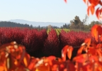 Oregon Nursery_Clack Co_064.JPG