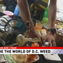 7 ON YOUR SIDE: Undercover look at pop-up weed store in DC