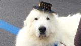 Dog-gone: Canine candidate re-elected Minnesota town mayor