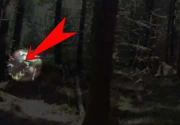 Refined Investigates: The Search for Bigfoot | Seattle Refined