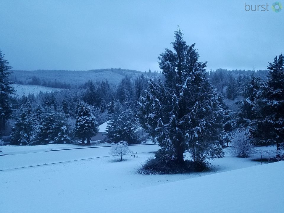 Snow in Kelso, Wash - Photo from Janis Snyder.jpg