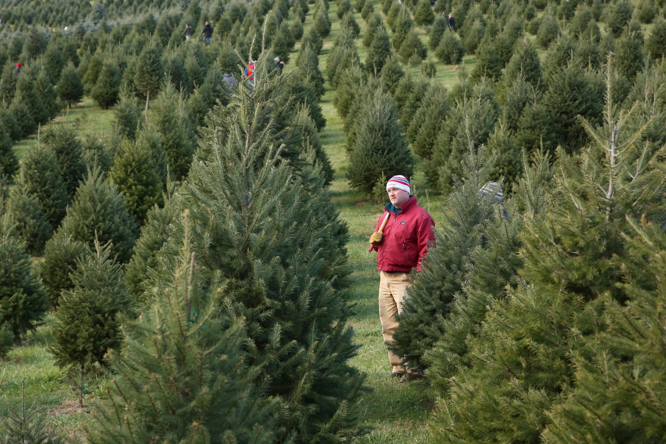 For 36 years they have been growing beautiful fir and spruce trees, along with freshly made, exquisite wreaths (Amanda Andrade-Rhoades/DC Refined)