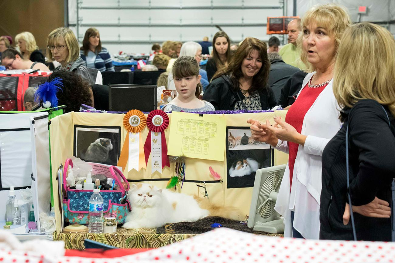 The Cincinnati Cat Club, Inc. held its 66th annual cat show April 14-15 at the Butler County Fairgrounds in Hamilton, OH. Award-winning cats and household cats alike were entered in the show. Multiple vendors catered to cat lovers with feline-centric products, and kitties in need of a home were available for adoption. / Image: Allison McAdams // Published: 4.16.18