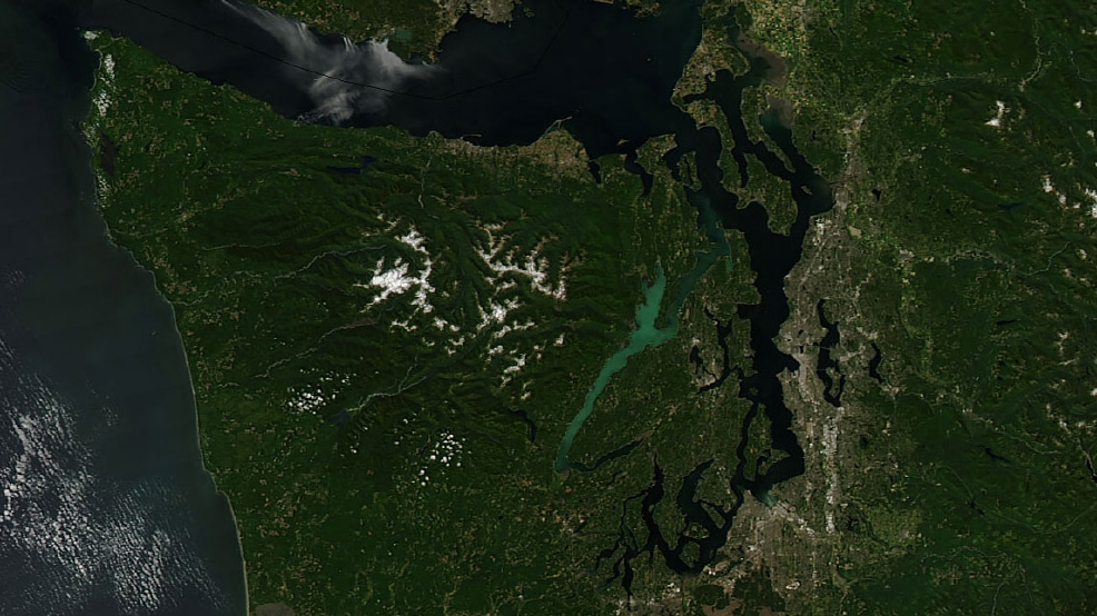 Huge Hood Canal phytoplankton bloom visible from space