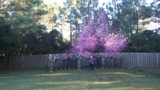 Military widow honors late husband with Veterans Day baby gender reveal
