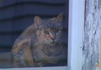 Video only on 10: Cats living in squalor at abandoned Pawtucket house