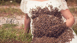 Ohio photographer captures unique maternity shoot with beekeeper