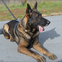 Jefferson Co. Sheriff K9 'Scout' dies during training exercise