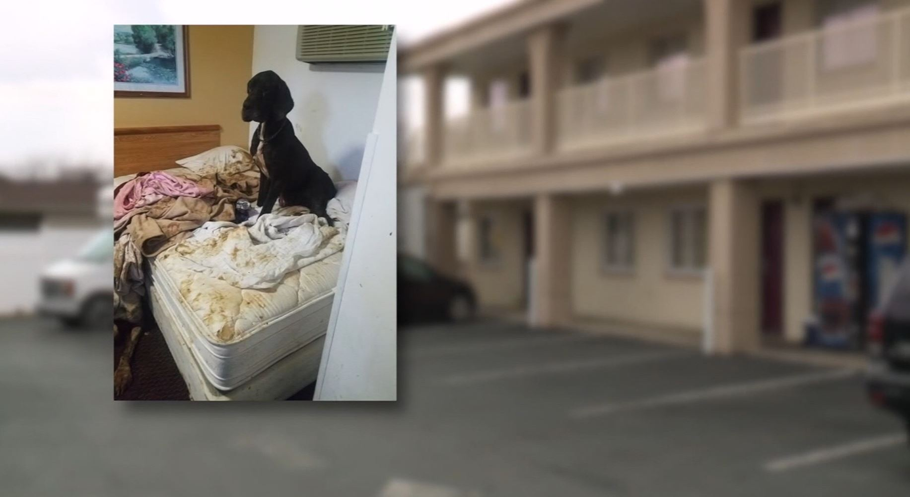 Police discover 3-year-old boy covered in dog feces in a hotel room he shared with his mother and 3 great danes (WEWS via CNN Newsource)