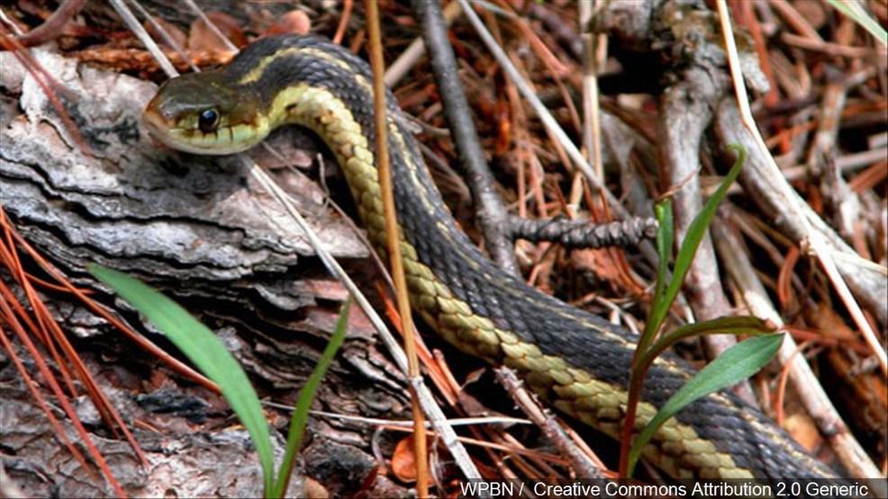 Fire kills about 60 pet snakes kept throughout home | KJZZ