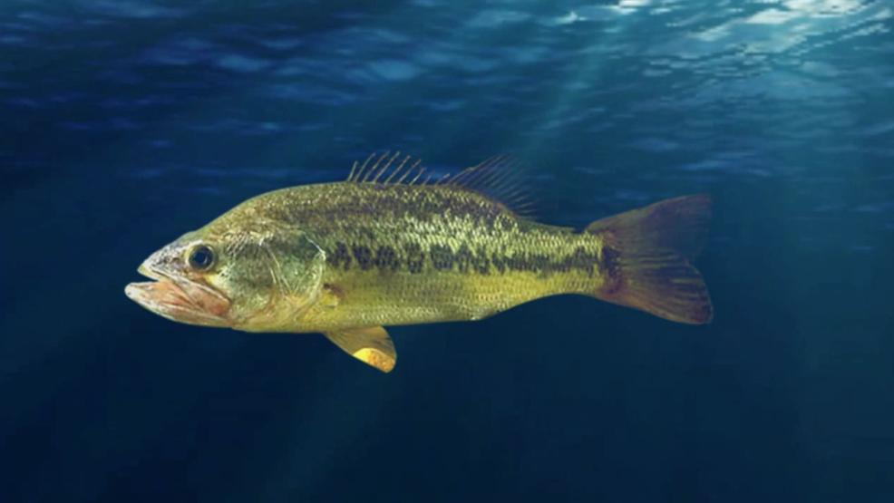Alabama Town Unveils Fish Monument | KIMA