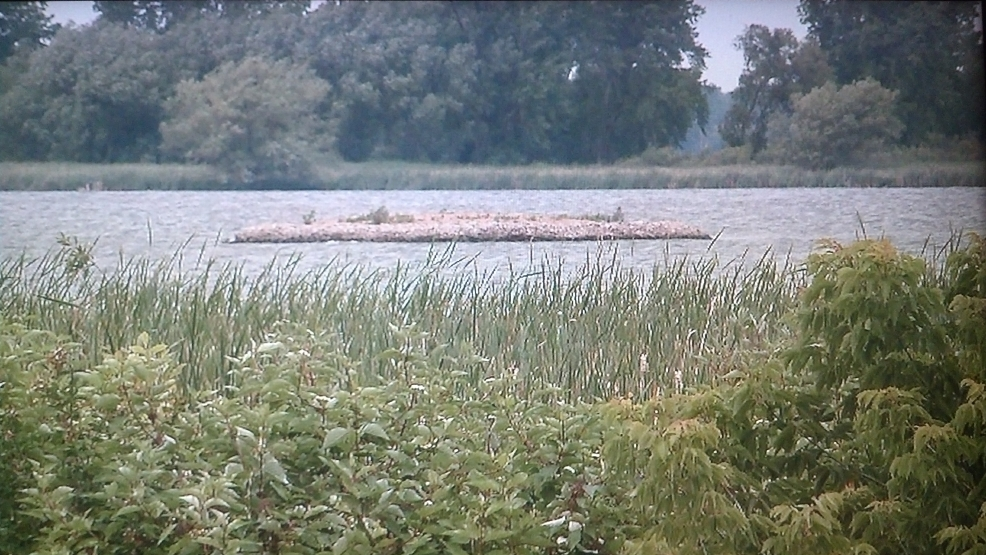 Dozens of Common Tern chicks were found dead on this Lake Butte des Morts island