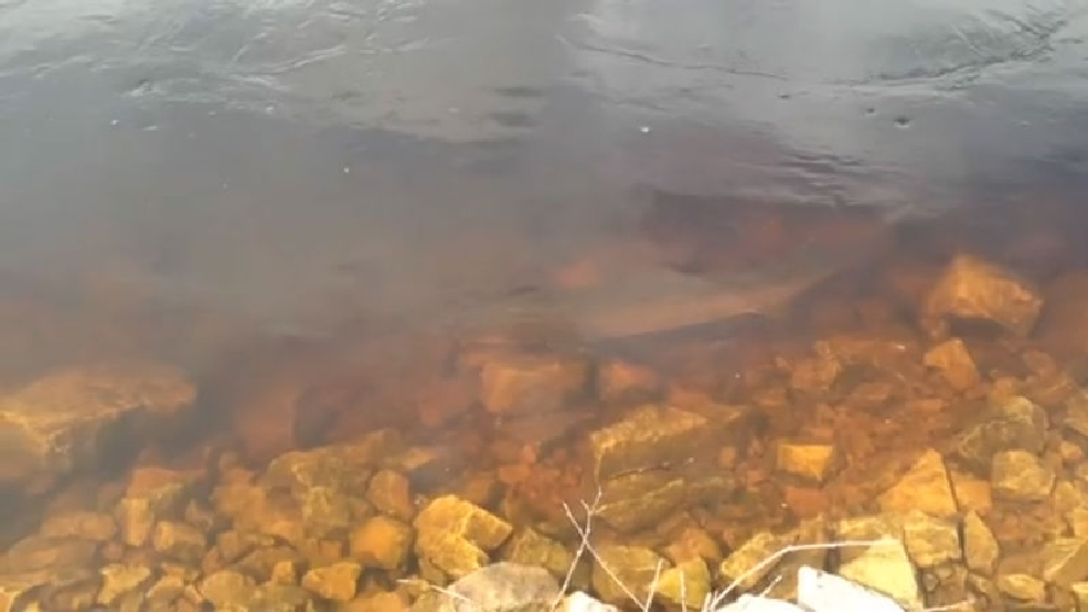 Thumbnail for April 26, 2014 ReportIt on sturgeon spawning
