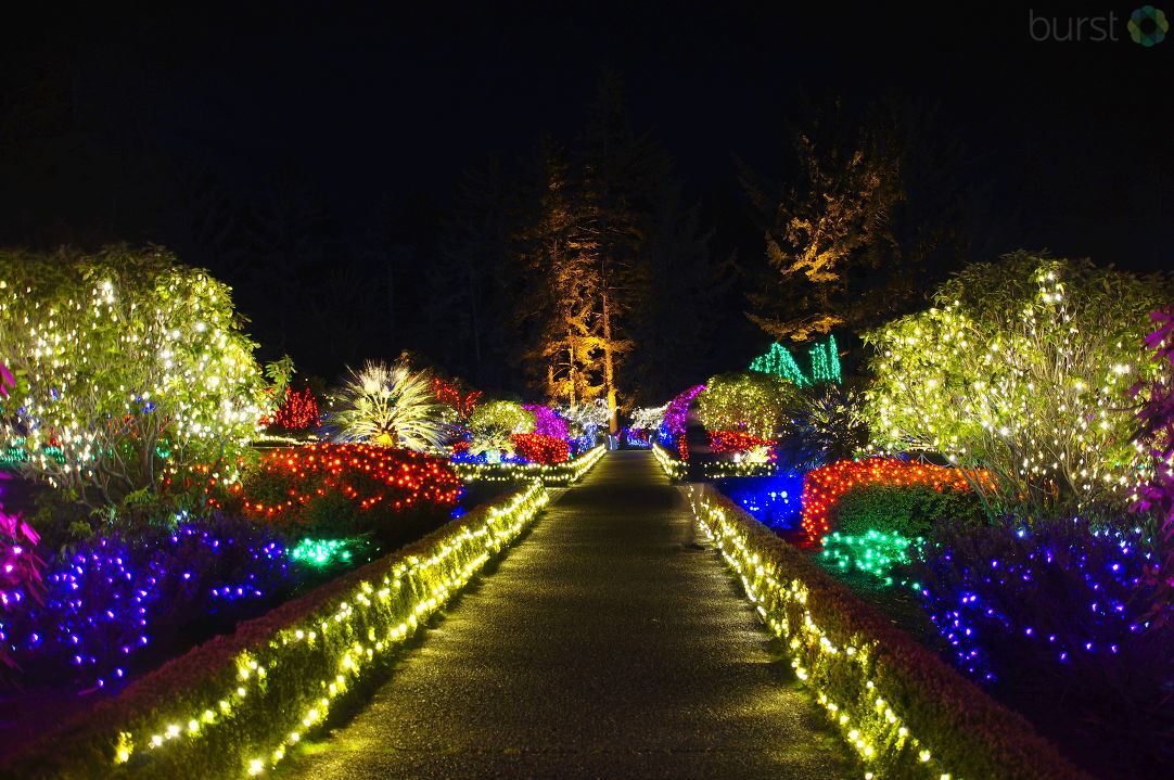 Debbie Tegtmeier shared these photos of Shore Acres via BURST.{ }The 31st annual Holiday Lights at Shore Acres continues through Dec. 31. This community tradition features 325,000 lights.