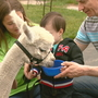 Two Rivers alpaca farm opens to the public