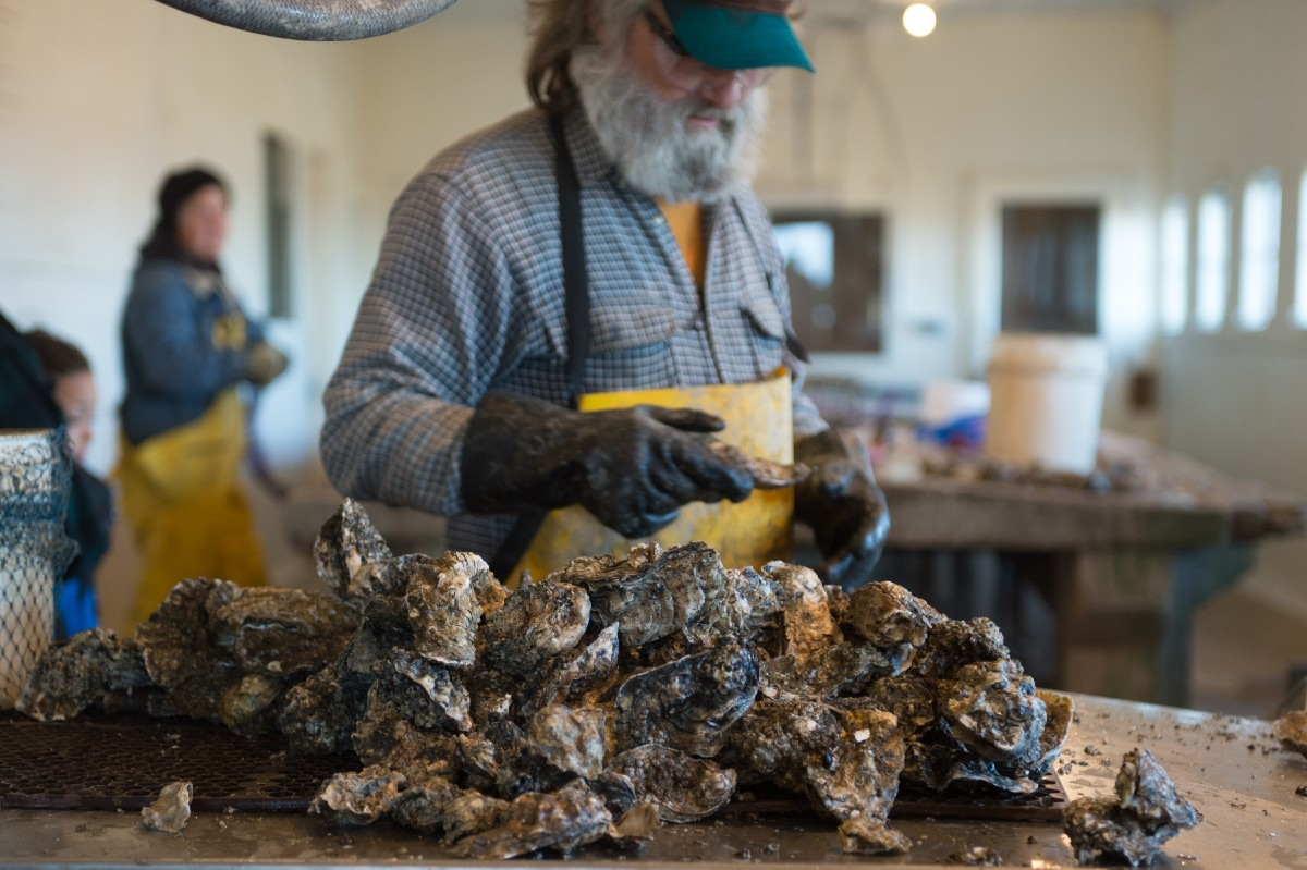 Oysterville processes oysters to be distributed locally, so no wholesale or commercial business here. The Depot proudly serves their oysters in explosively tasty dishes like their Oysters 'Scargot. (Image: Chona Kasinger / Seattle Refined)
