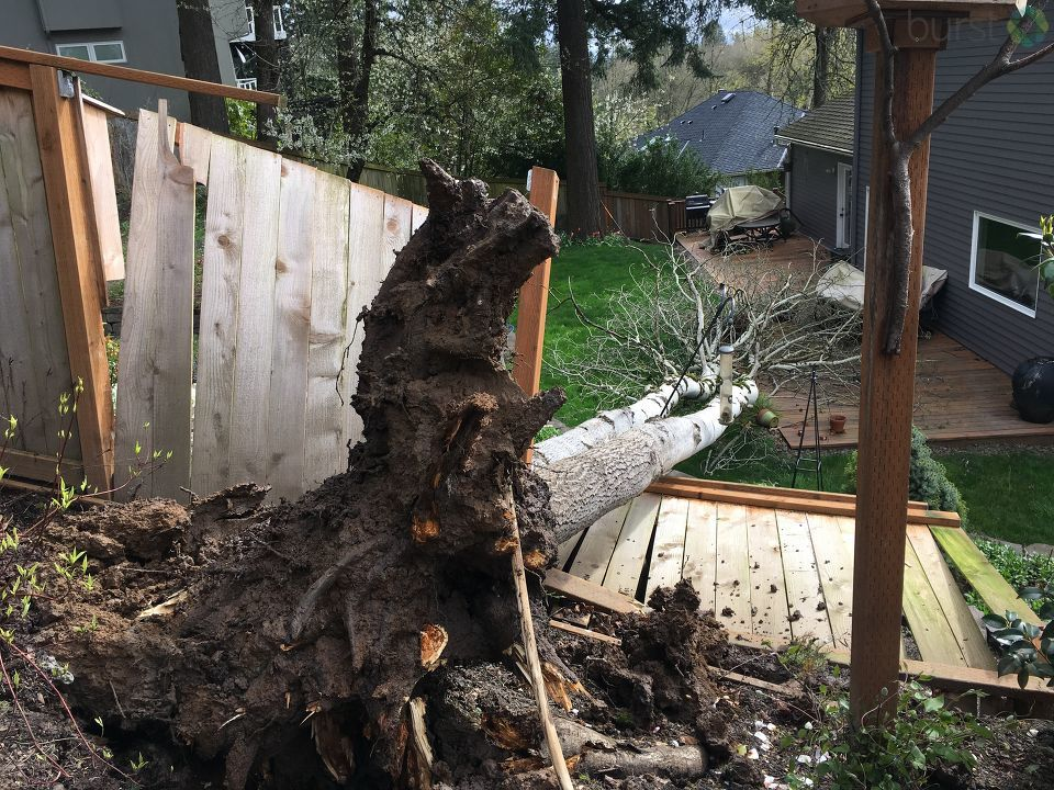 Damage in Lake Oswego from Kendall Jones.jpg