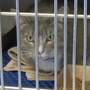 Animal Services looking to place 'warehouse cats'