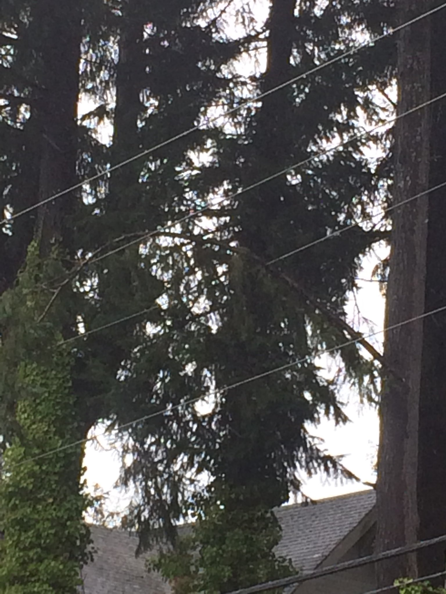 A tree branch falls on a power line in Olympia (Photo: Olympia Fire Department)<p></p>