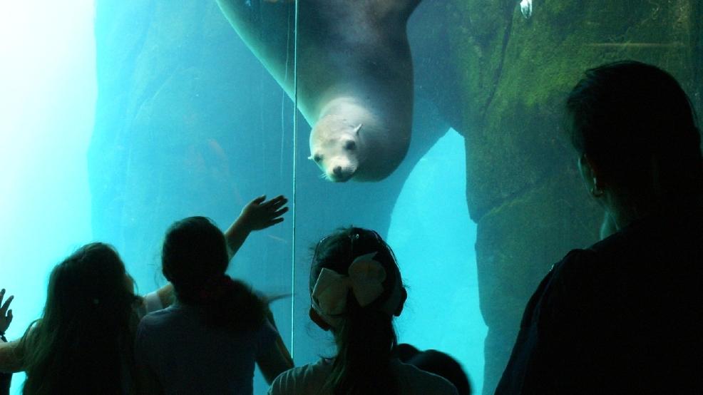 Popular Sea Lion Sushi Dies Unexpectedly At El Paso Zoo Kfox