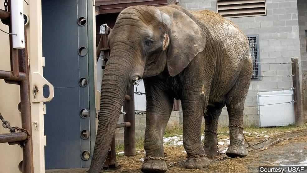 Nashville citizens protest Shriners wild animal circuses