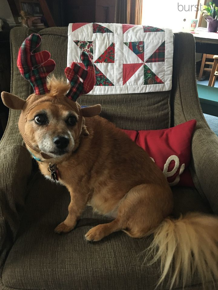 Thank you to viewers who sent in photos of their pets getting in the holiday spirit! Submit your own holiday photos at Burst.com/KATU!