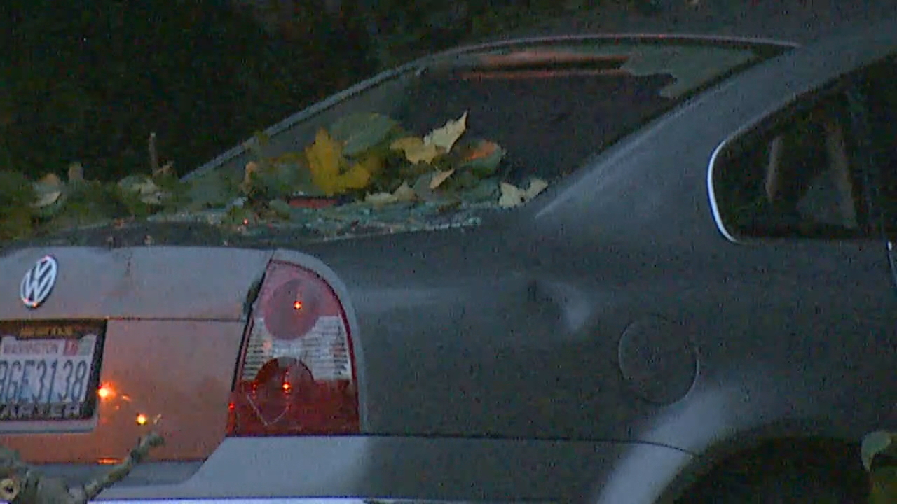 Trees, power lines down on cars in Kent (Photo: KOMO News)