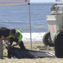 Body of Texas woman found on Ocean City, Md. beach