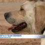 Meet Goldie: NHP's new K9 with a nose for sniffing narcotics