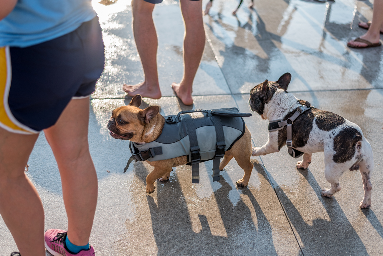 Over-the-Rhine's Ziegler Pool celebrated its last day of being open by having a doggie swim party. This took place on Sunday, Sept. 17. / Image: Mike Menke // Published: 9.17.17