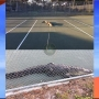 Alligator looking for love on tennis court