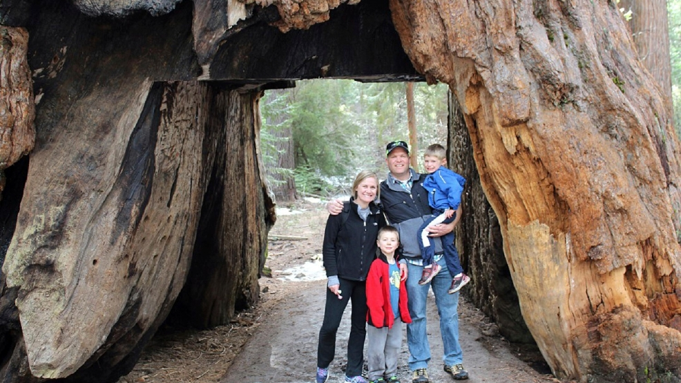 Sequoia Tree Facts For Kids