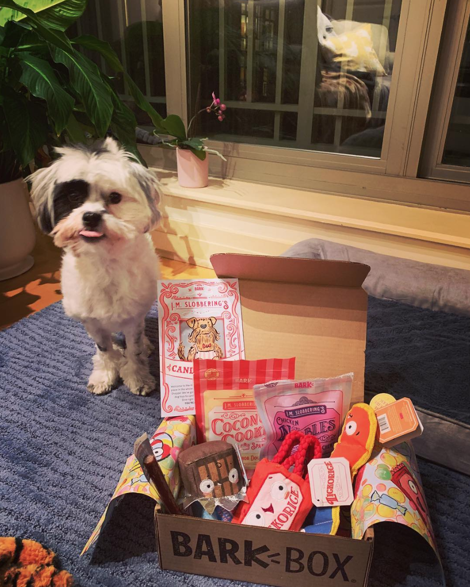 Dogs can't have chocolates, but they deserve all the treats! (Image via @oliveindc)