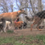 Kalamazoo lawmaker working on bill to start 'dangerous dog registry'