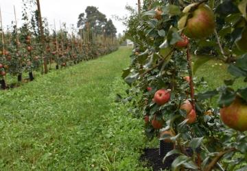 5 U Pick Orchards To Visit This Apple Season