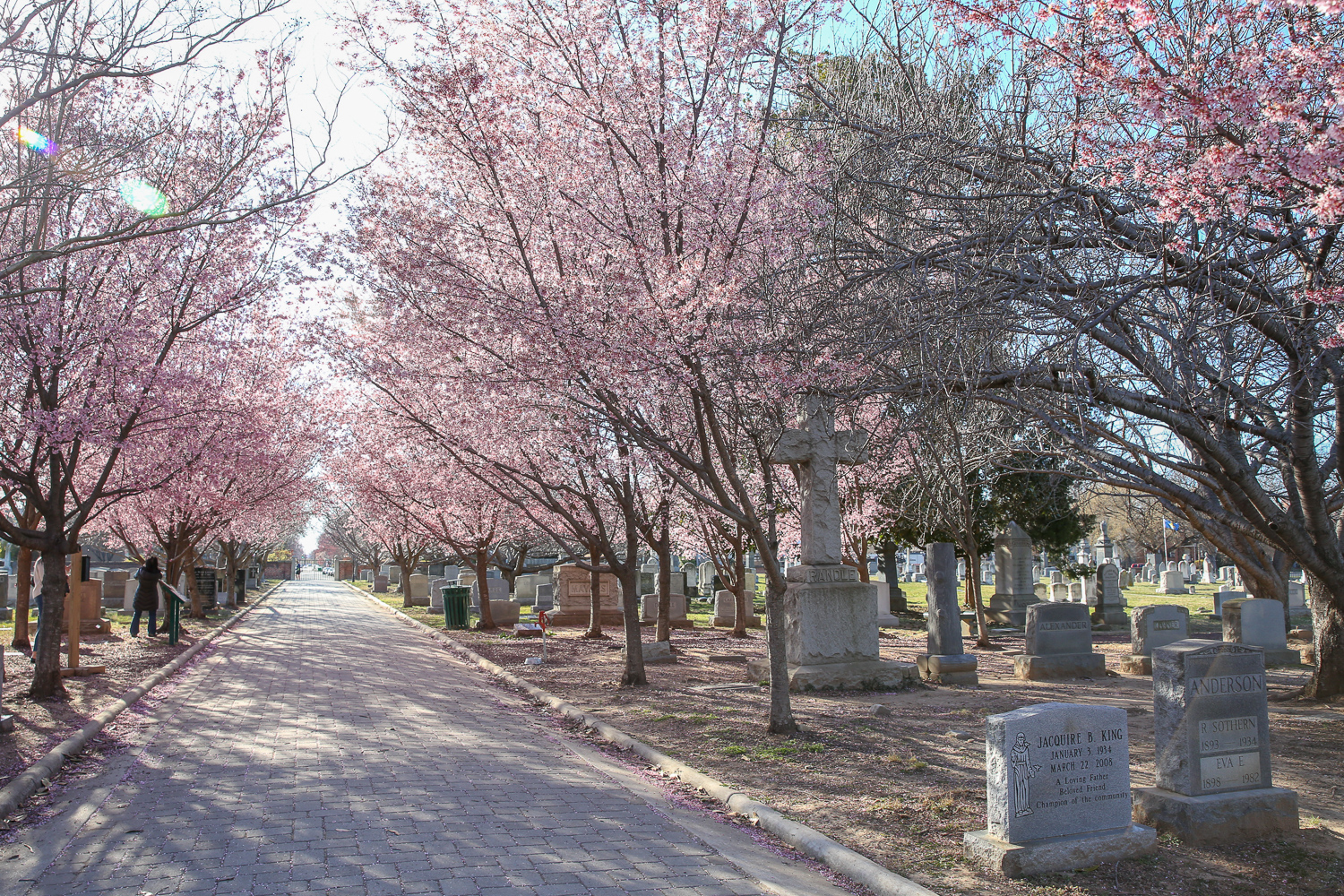 A cemetery may seem like an odd choice, but Congressional Cemetery is also a dog park and home to some early-blooming trees. You can buy a day pass for your dog, but admission for humans is free and there's plenty of benches to lounge on. (Amanda Andrade-Rhoades/DC Refined)