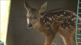 'Leave that baby alone': Woman's 'rescue' of 2-day-old fawn backfires
