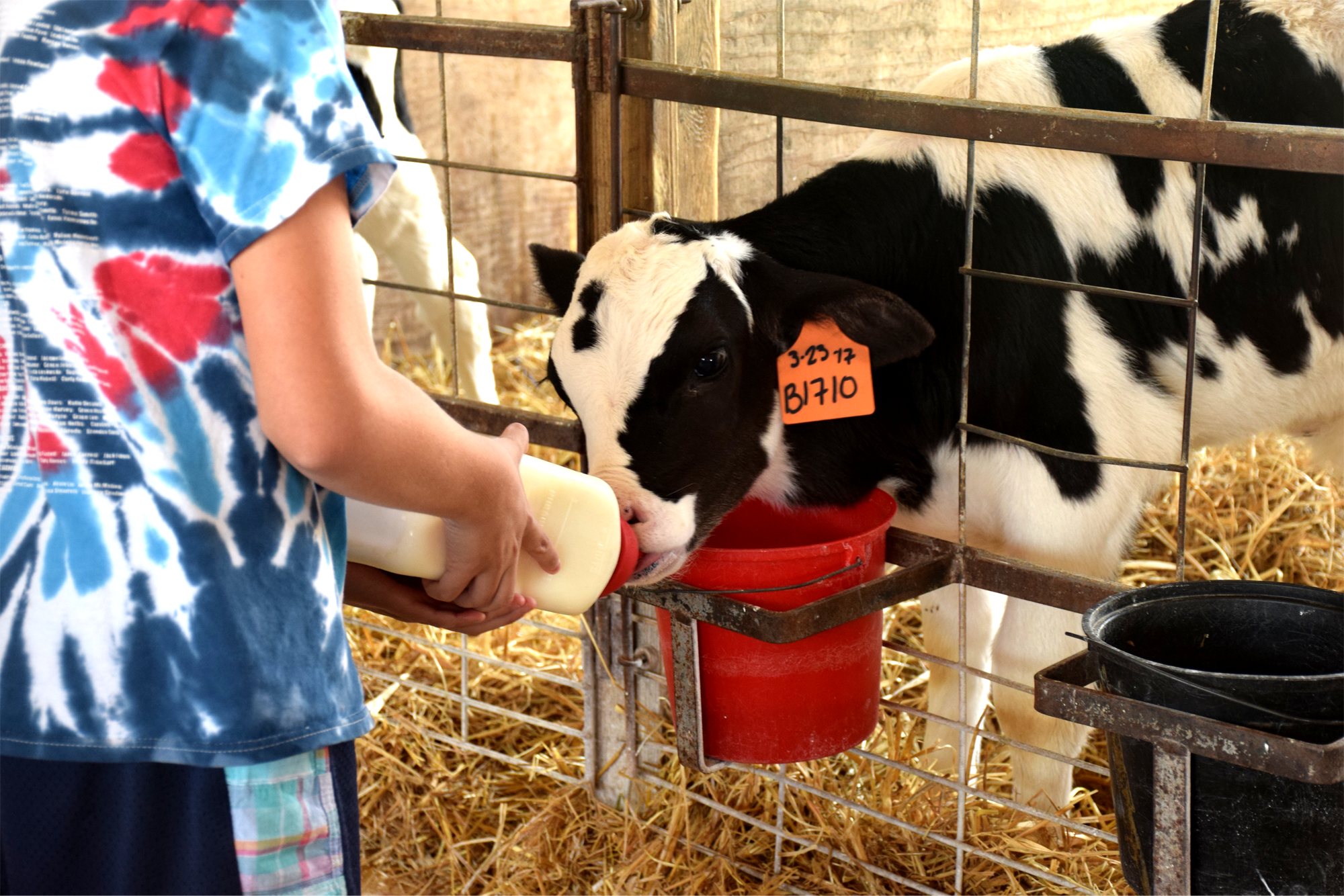South Mountain Creamery in Middletown, Md., allows visitors to feed the calves each day at 4 p.m.{ }(Image: Courtesy South Mountain Creamery)