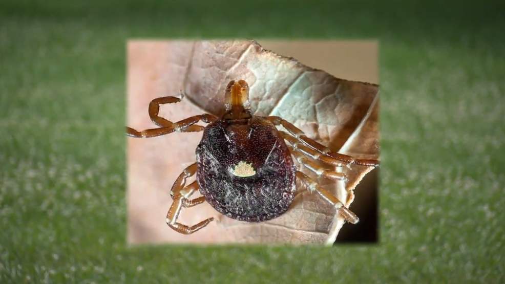 TICK SEASON | Lyme disease cases have tripled since the '90s