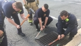 D.C. Fire rescues 8 ducklings from storm drain in SW as mom supervises