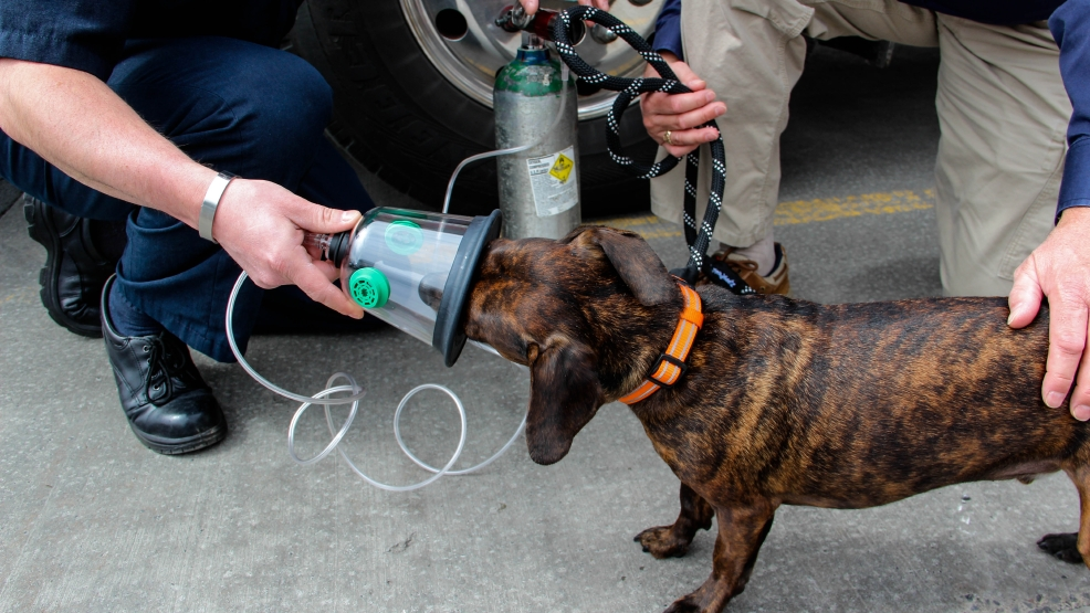 Wyoming County Fire Departments Receive Pet Oxygen Masks