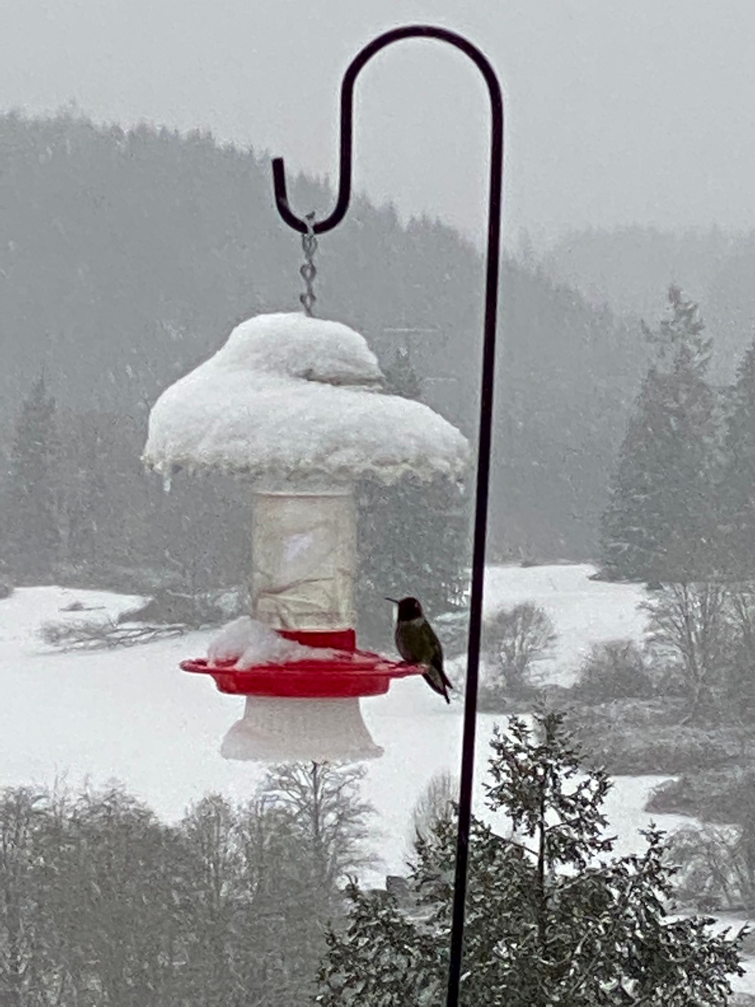 Our hummingbirds don't mind the snow (Image: Judy Deklyen / Chime In)