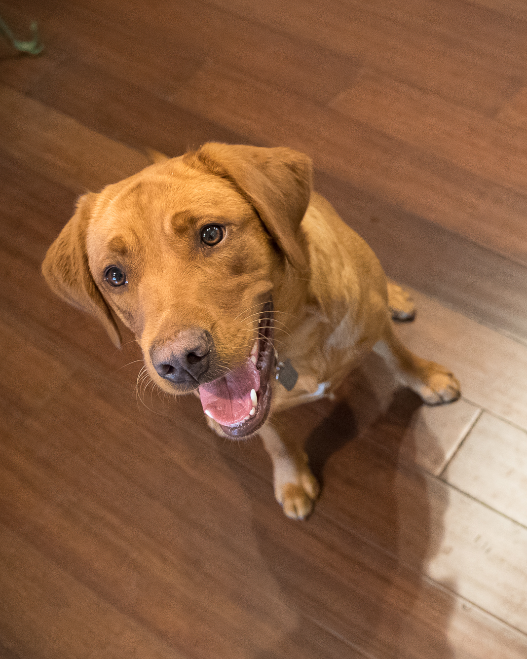 Sable, shop dog at Grainwell / Image: Phil Armstrong, Cincinnati Refined // Published: 6.8.18