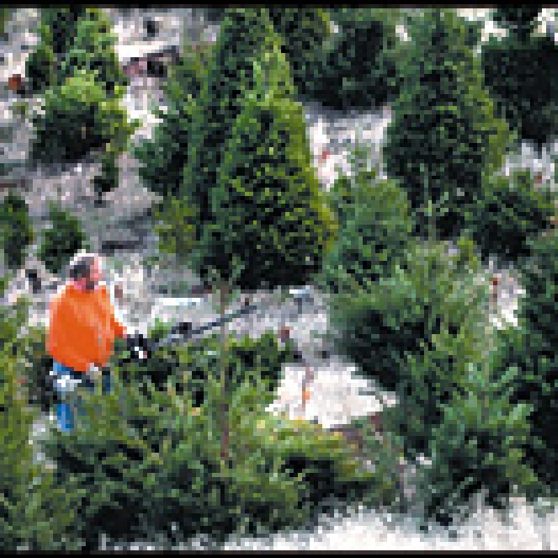 Trees for the season | Mail Tribune