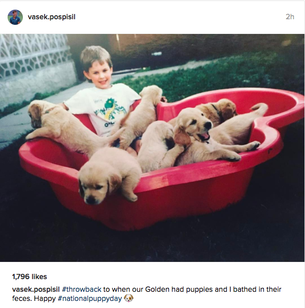 "Vasek Pospisil ""#throwback to when our Golden had puppies and I bathed in their feces. Happy #nationalpuppyday ??"""