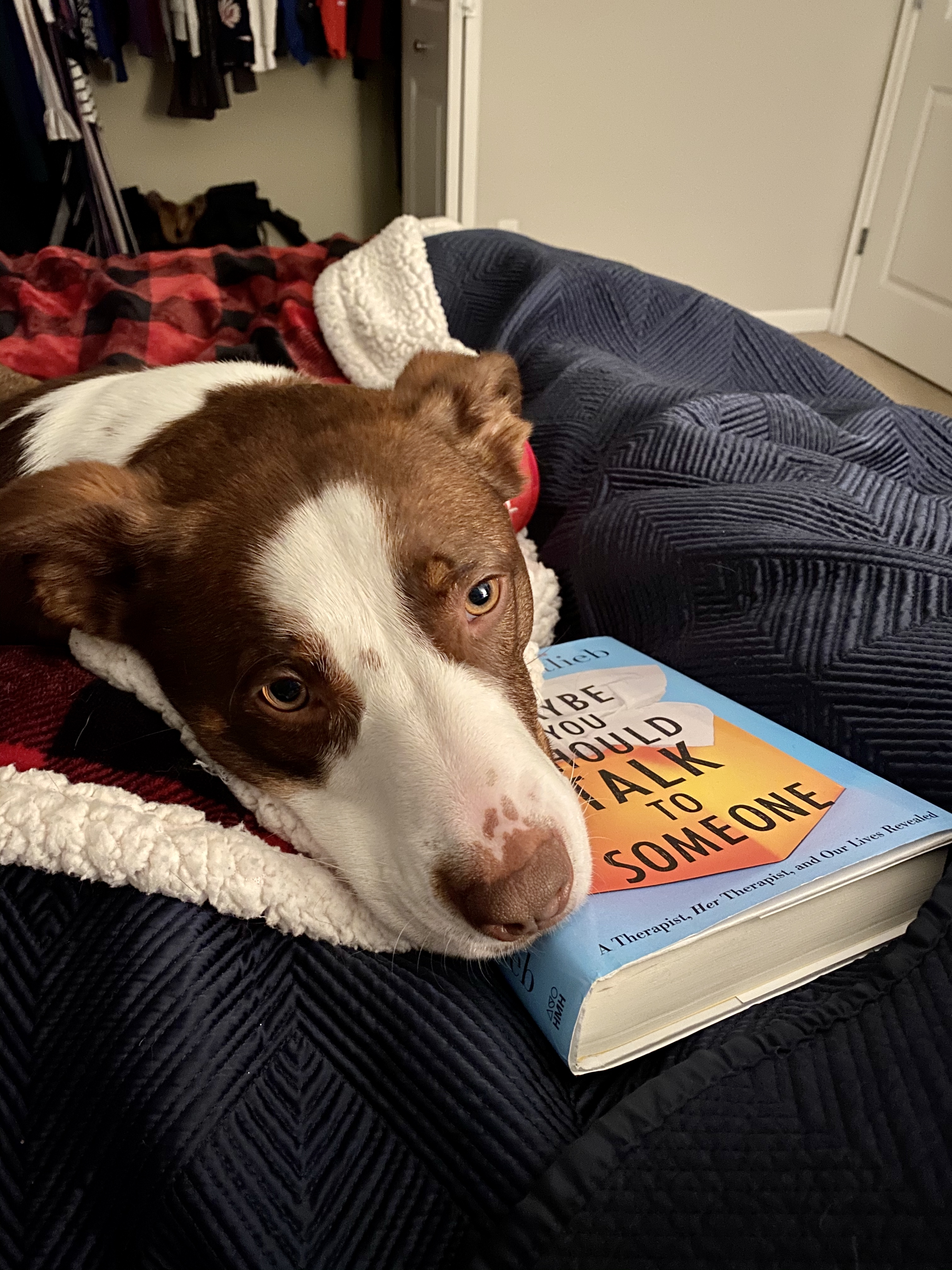 """Remi, enjoying her latest book club book!"" Happy National Love Your Pet Day! (Image: Britt Thorson)"