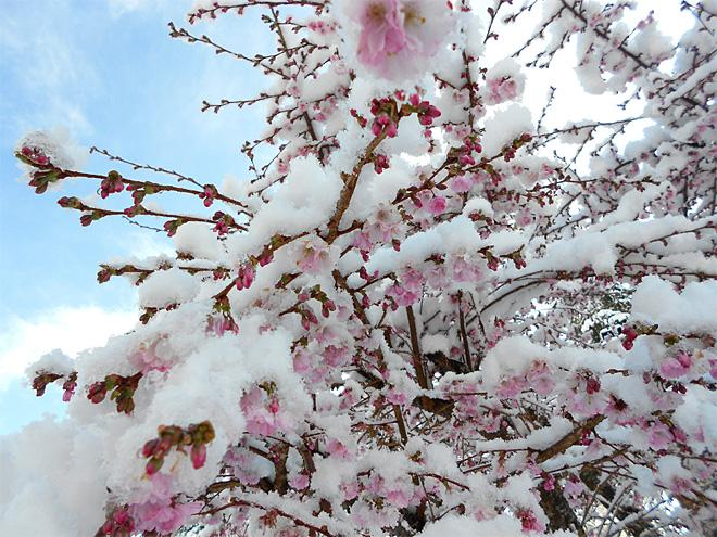 Spring battles winter in Mill Creek (Photo Courtesy YouNews contributor: cheryllwelch0658)